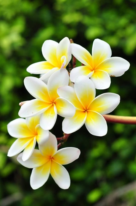 Pictures Of Flowers Beautiful Natural Pictures Of Flowers Stylish Profile Pictures